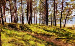 saulkrasti forest beach view 300x186 - 5 Things to See in Riga